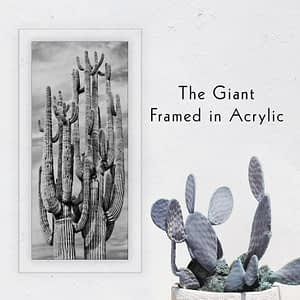 """The Giant"" Saguaro Cactus Wall Art with a modern acrylic frame"