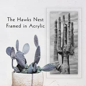 """The Hawks Nest"" Giant Saguaro Cactus Wall Art"